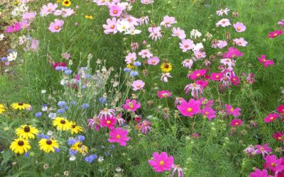 New Ways to Use Wildflowers by American Meadows