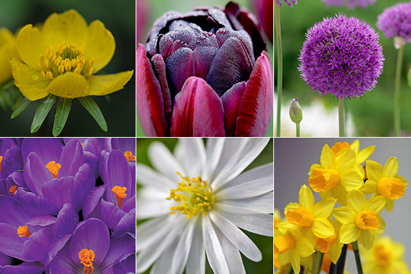 Fall Bulb Planting Tips For Spring Color!