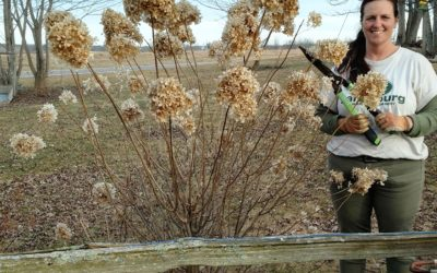 What to Cut…or Not…after a Killing Frost