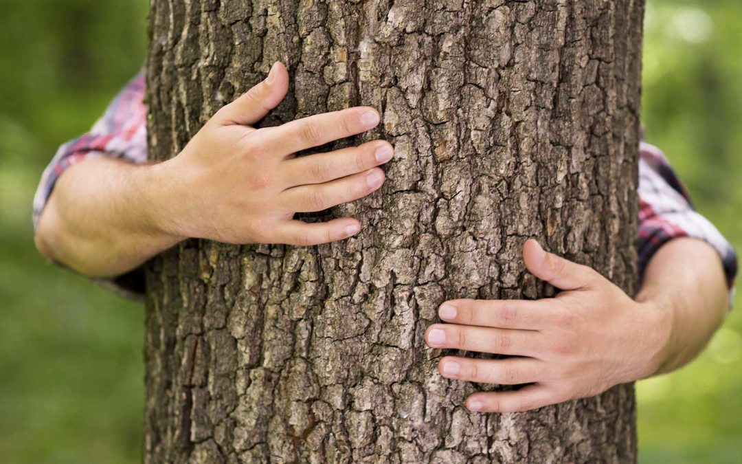 Rescuing Your Storm-Damaged Trees, Shrubs and Perennials