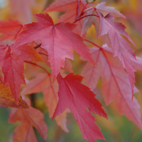 Tips for Adding Fall Color!